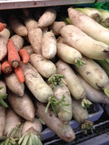 Long white radish